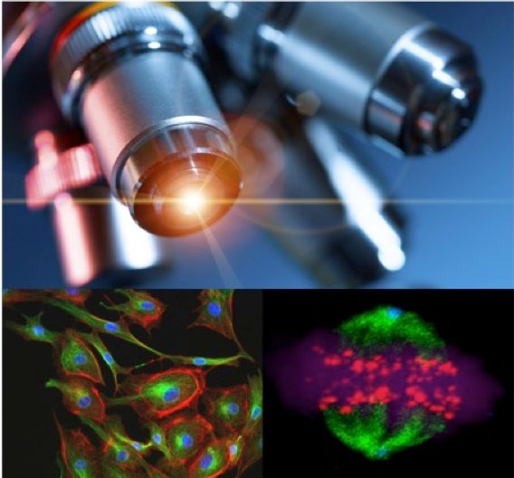 Advanced Microscopy Shared Resource